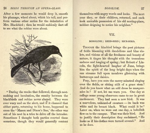 Pages from Bailey's Birds Through an Opera-Glass