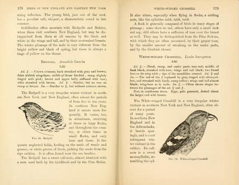 Pages from Hoffman's A Guide to the Birds of New England and Eastern New York