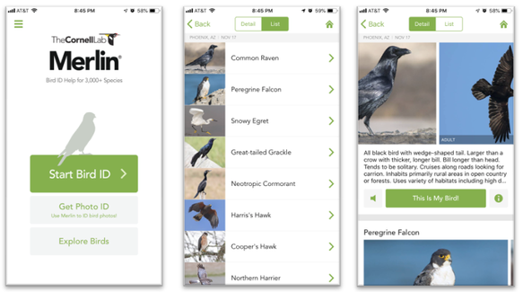 Screenshots from The Cornell Lab of Ornithology's Merlin Bird ID mobile application